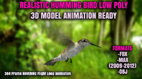 3d model realistic humming bird animation