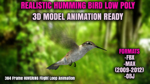 3d model realistic humming bird animation