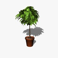 3d cartoon plant model