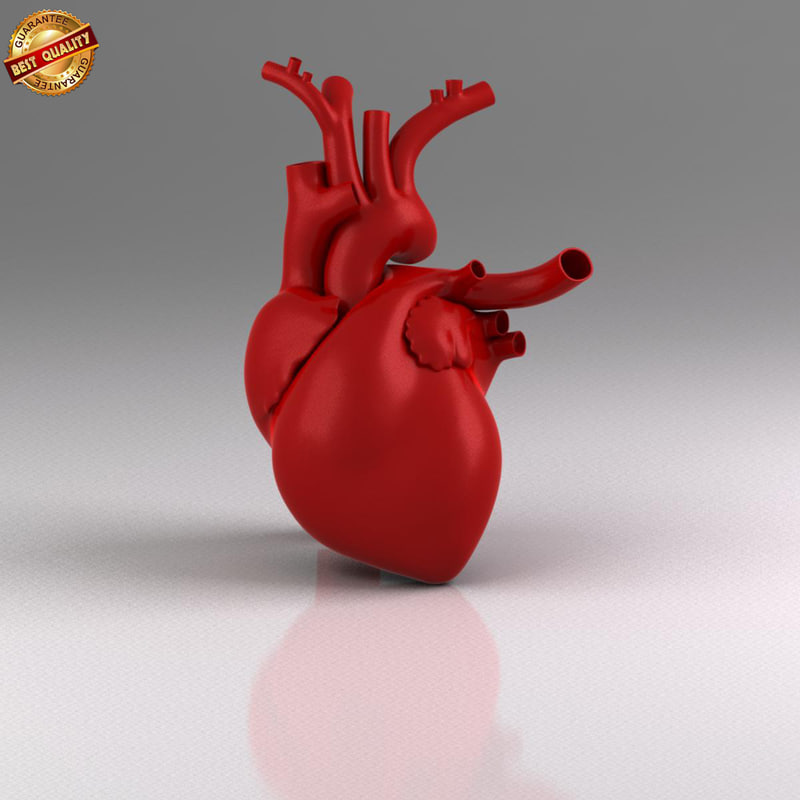 anatomy medical 3d fbx