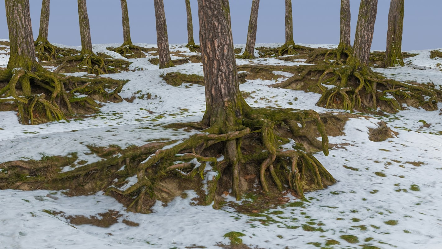 winter forest 3d max