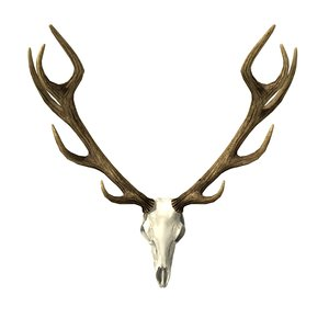 3d hunting trophy