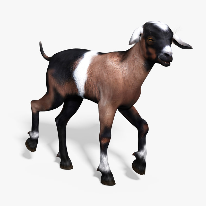 3d baby goat rigged