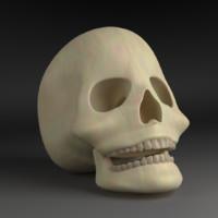 human skull obj free