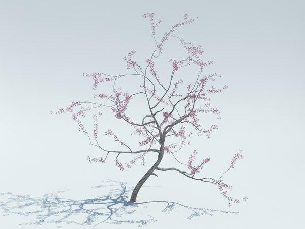 realistic sakura tree 3d model