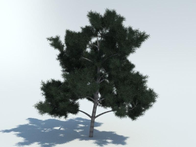 realistic pine tree 3d x