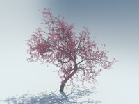 realistic sakura tree 3d model
