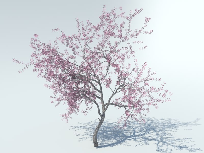3d realistic sakura tree model