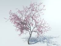 3d realistic sakura tree model