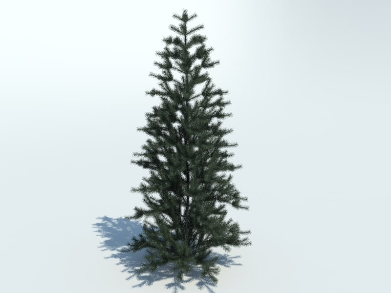 realistic fir tree max