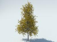 3d realistic aspen tree