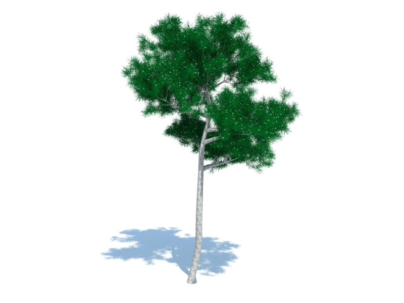free max model realistic tree