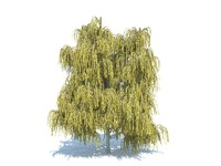 realistic willow tree max