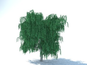 free max model realistic willow tree