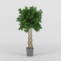 3d model ficus tree