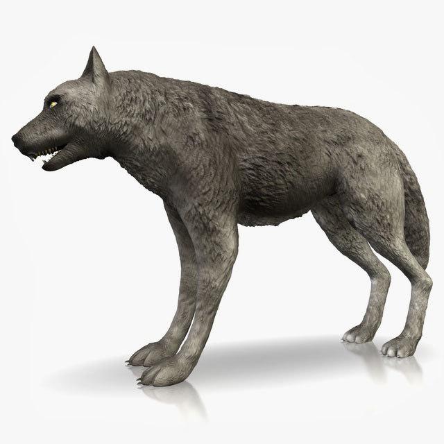 3d grey wolf