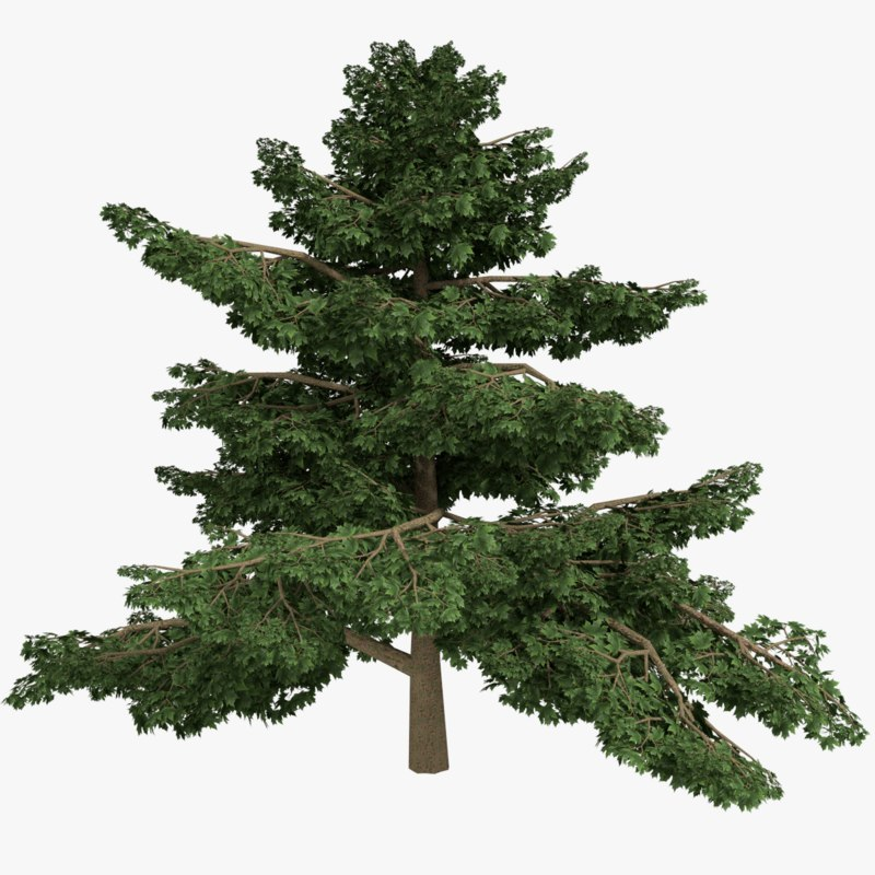 3d model realistic platanus tree type