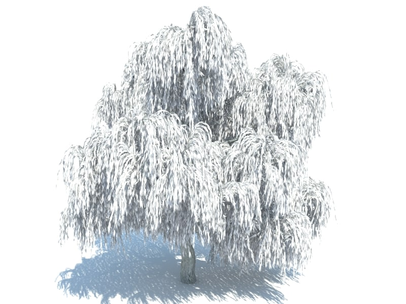 3d realistic willow tree