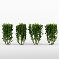 3d model buxus bushes