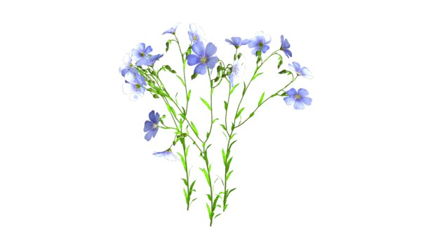 3d flax plant model