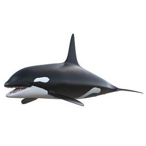 3d killer whale orca
