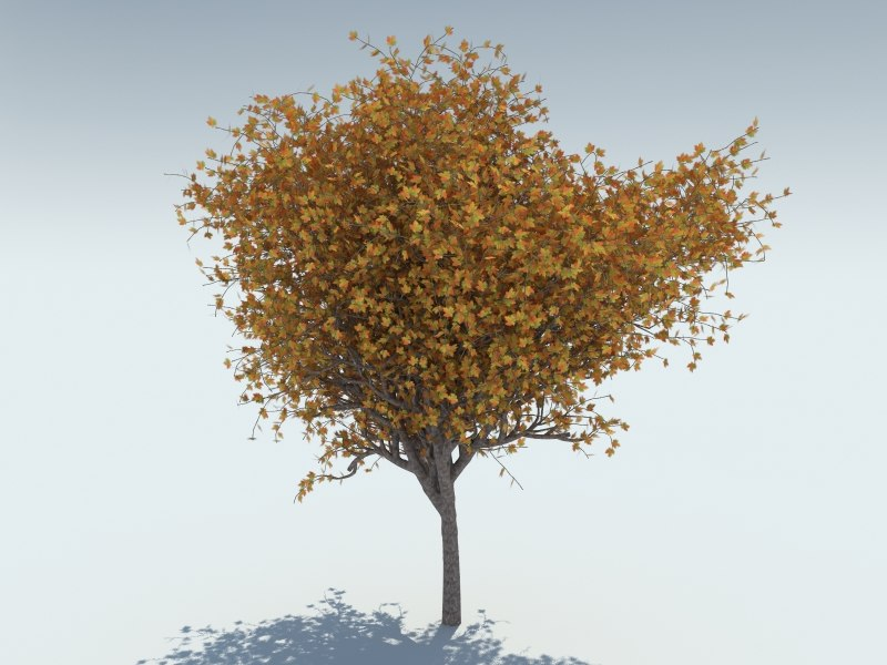 3d model realistic maple tree