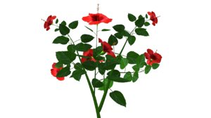 geitonogamy flowering 3d model