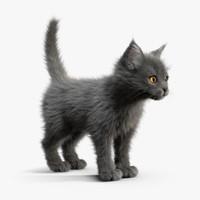 kitten grey 3d model