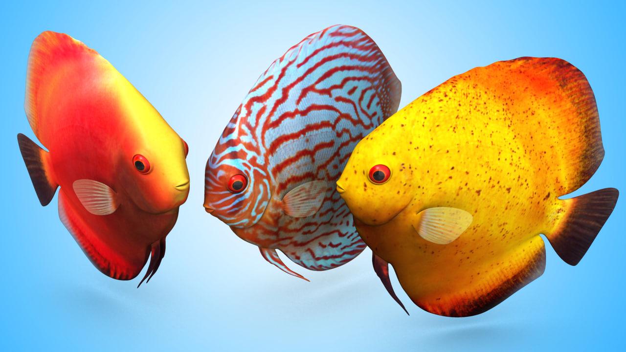 obj discus fish