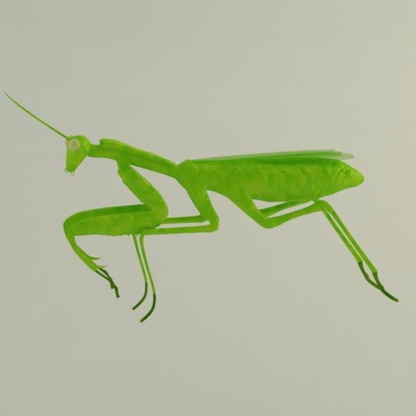 3d mantis