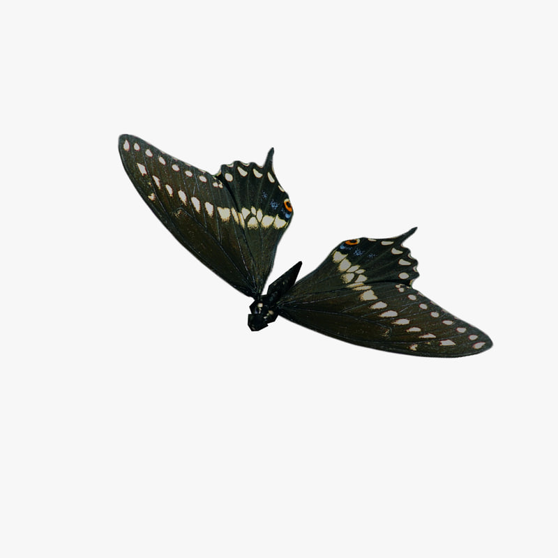 animation fly butterfly 3d model