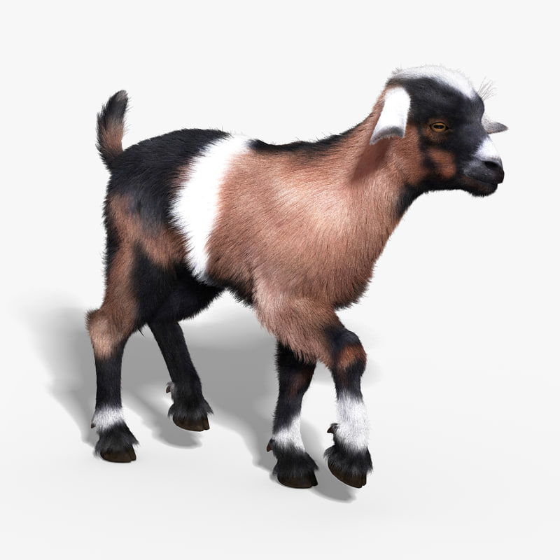 3d model baby goat fur rigged