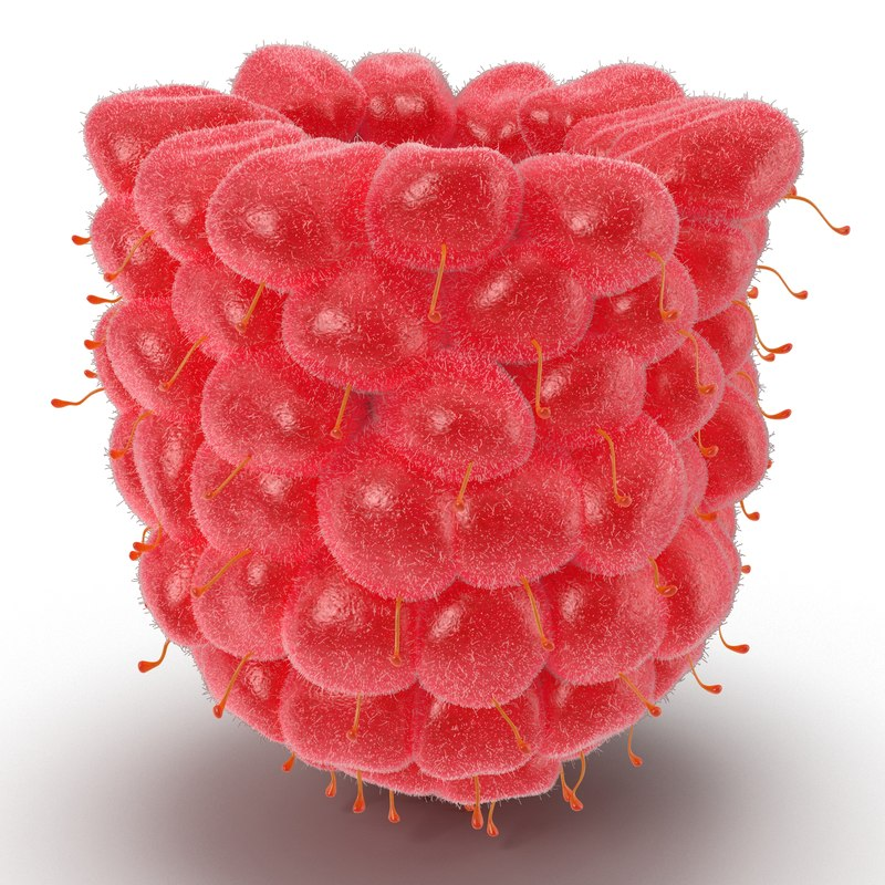 3d model of raspberry 6 fur
