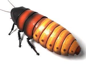 3d madagascar hissing cockroach beetle bug
