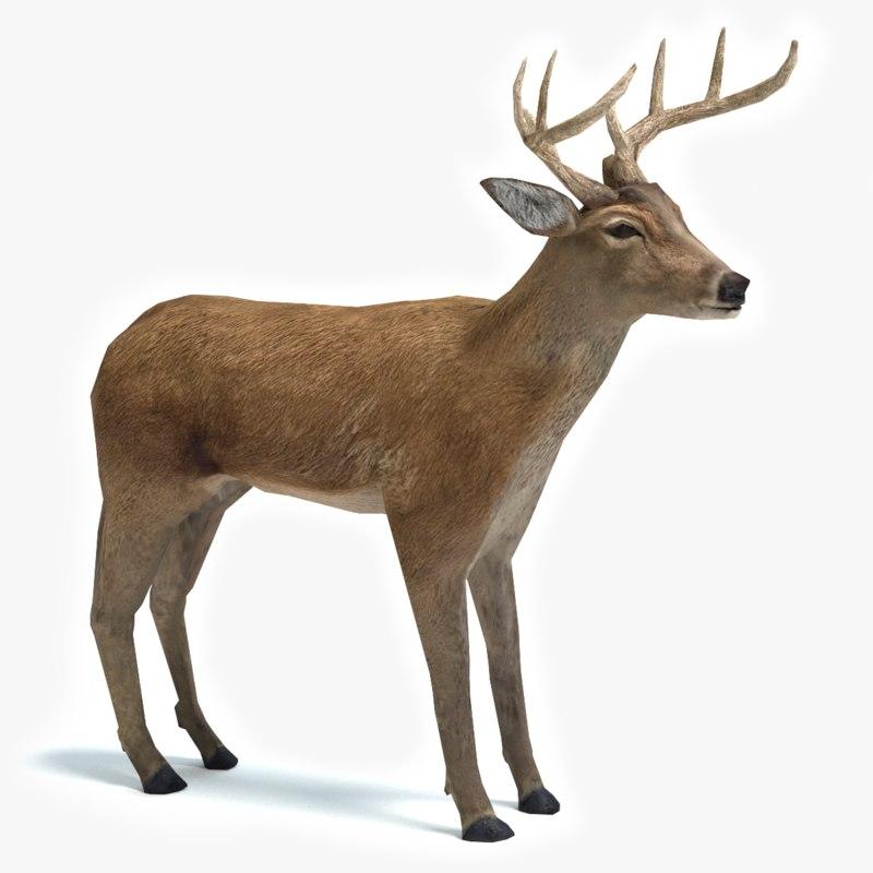 deer 3d model