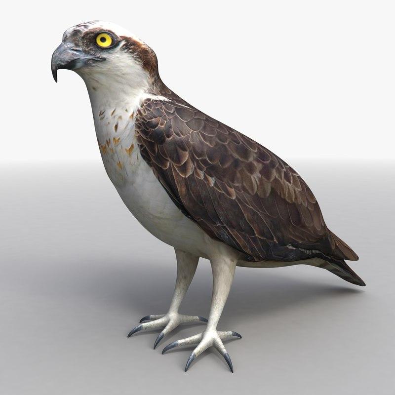 3d standing osprey