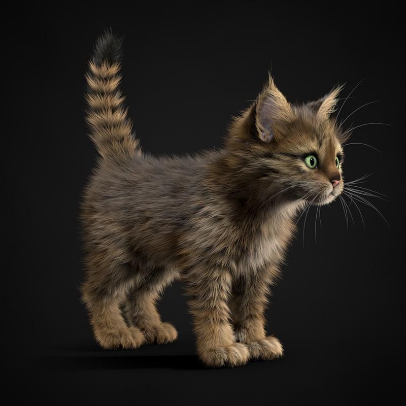 kitten tabby 3ds
