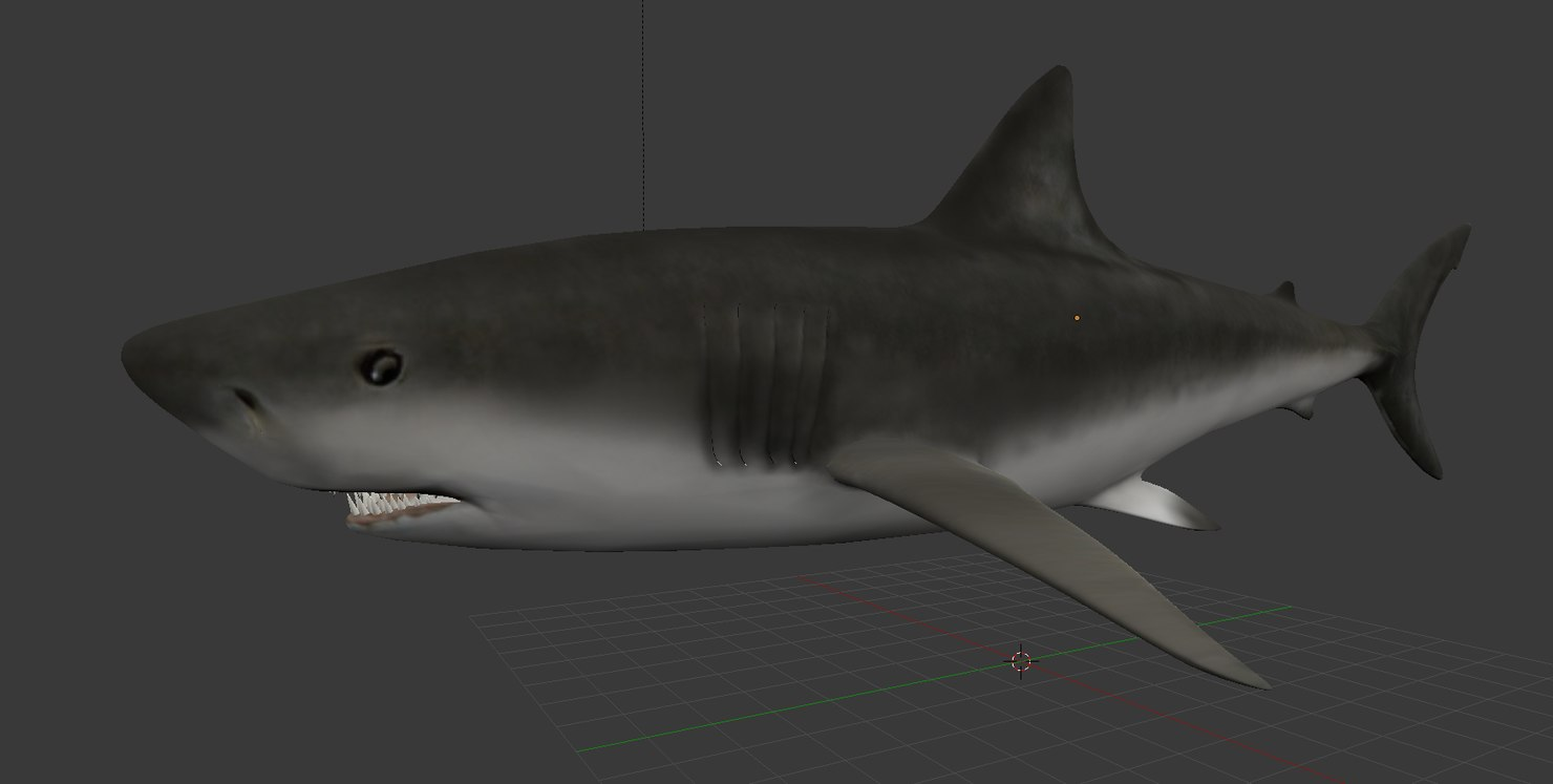 3d model shark ready