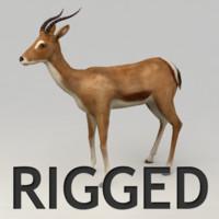 Antelope rigged