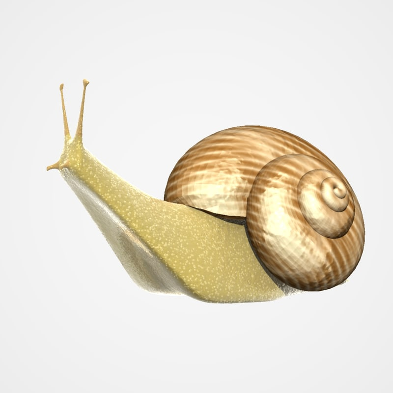 snail lightwave 3d model