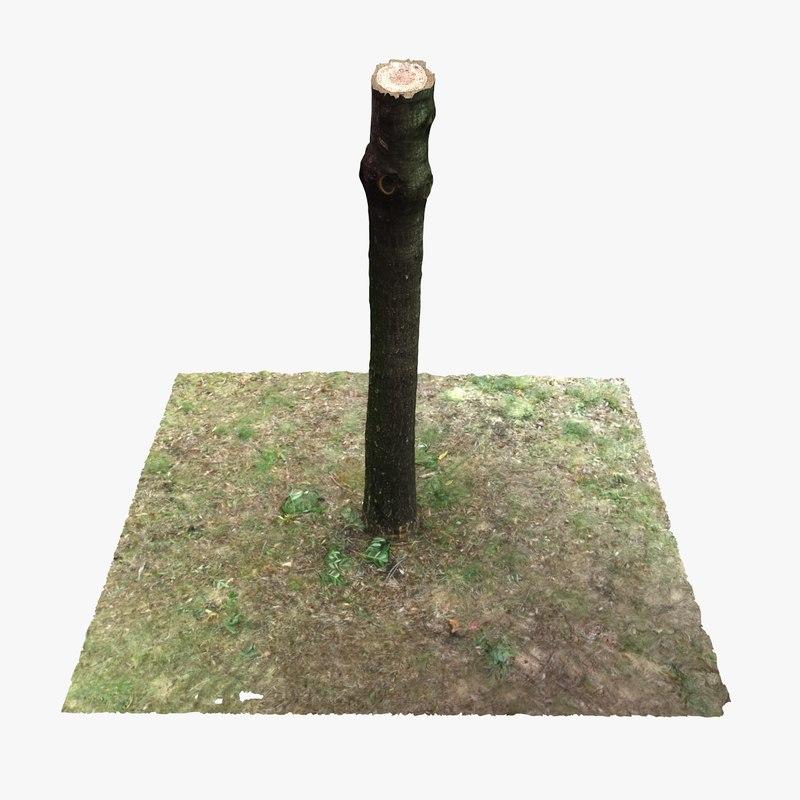 max tree trunk 2