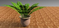 fern plant pot 3d 3ds