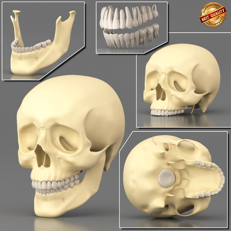anatomy medical science 3d x