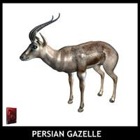 maya persian gazelle