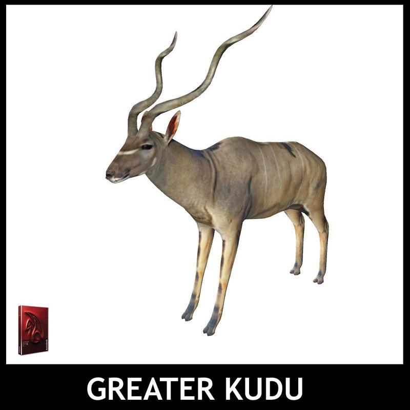 greater kudu 3d model