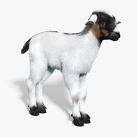 baby goat white fur obj
