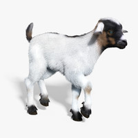 baby goat white fur 3d max