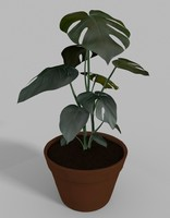 3d indoor fruit salad plant
