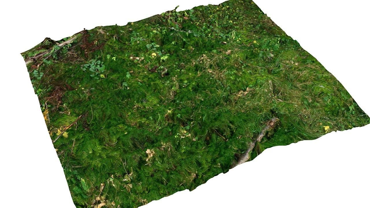 3d model moss litter ground