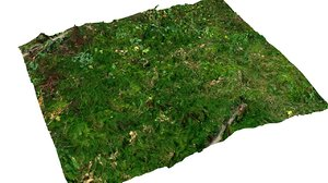 3d model moss litter ground